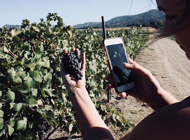 We can't wait till our next adventure in the vineyard  #drinkseinna . . . . .. . . . . . . . . . #seinnawine#seinna#wine#winelover #winesisters #vineyard #photography #vines #harvest2018 #santabarbaracountywine