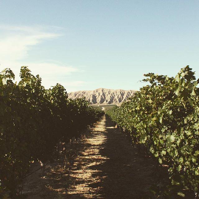 Seinna on our mind! #drinkseinna . . . . . . . . #seinnawine#seinna#wine#winelover #winesisters #vineyard #photography #vines #santabarbaracountywine #cabernetsauvignon #vines #familylife