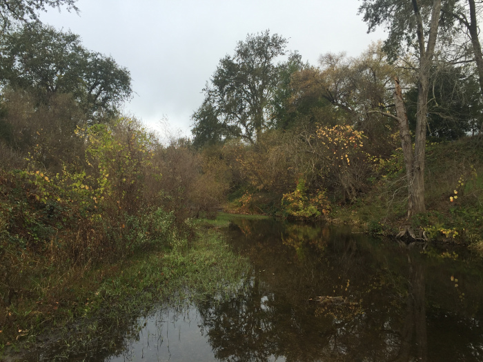 The Napa River in St. Helena, November 2016