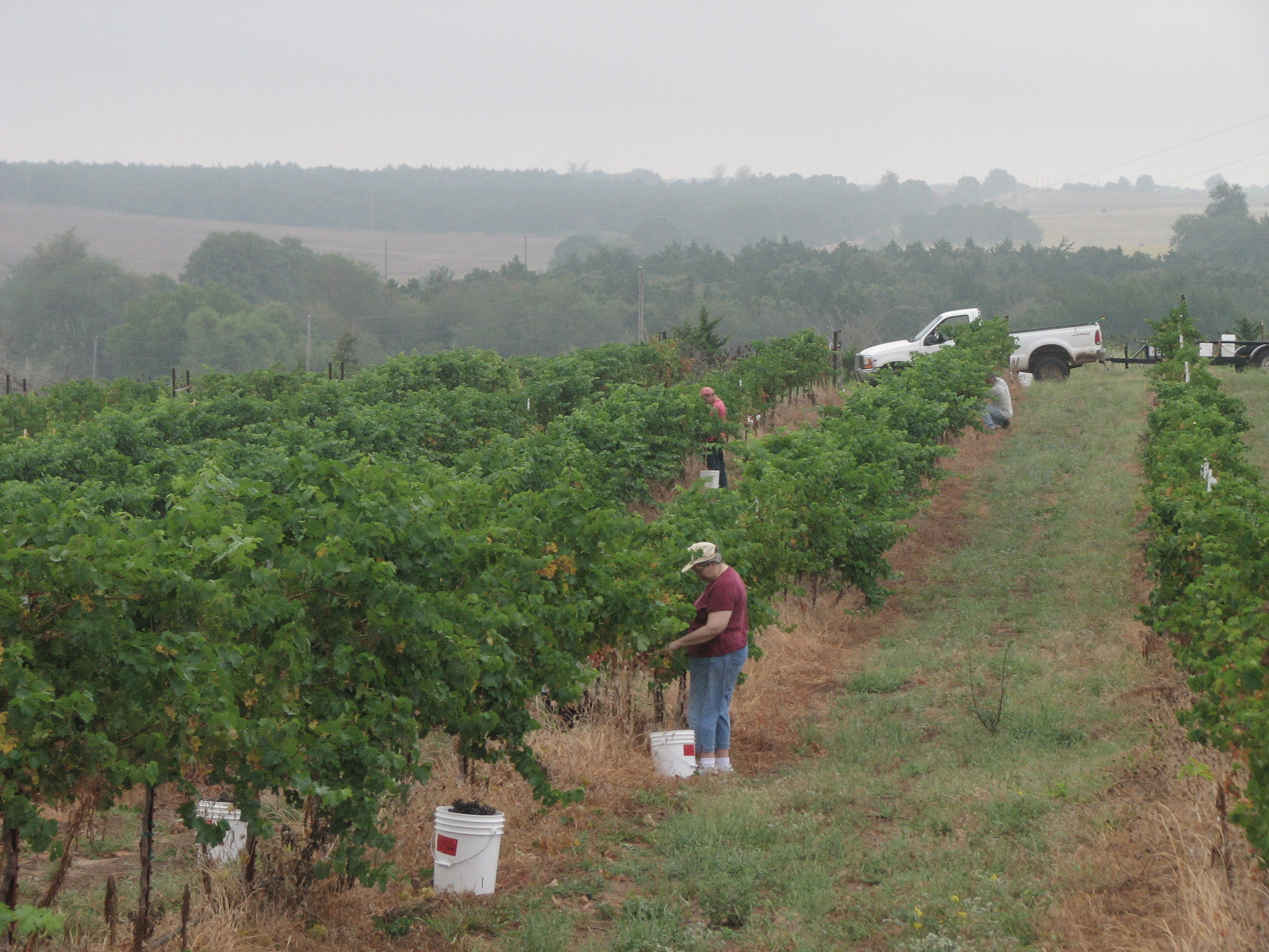 Brads Harvest 082007 (11).JPG
