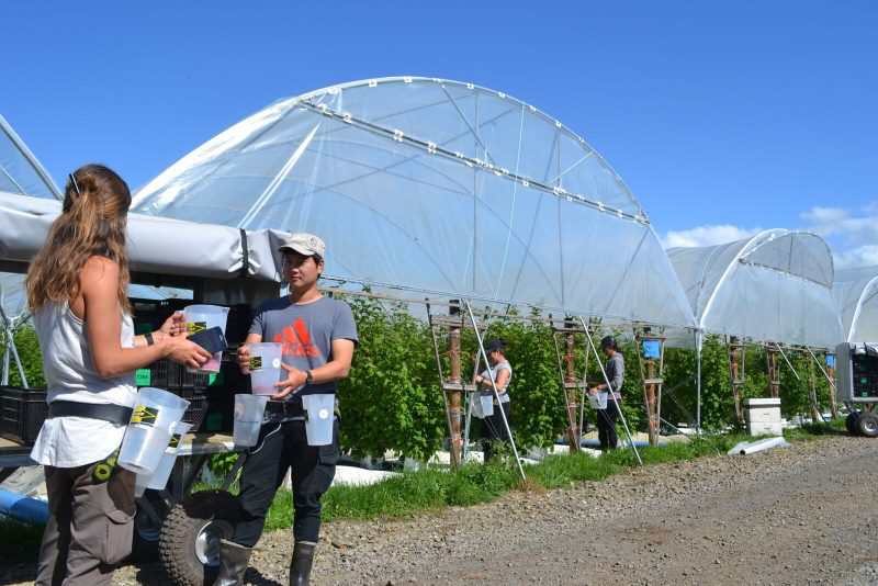 Horticultural software startup Dataphyll uses radio-frequency identification (RFID) cards, mobile near-field communication (NFC) and mobile apps to streamline the fruit harvesting management process.
