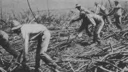 Filiipino Sugar Cane workers in Puna