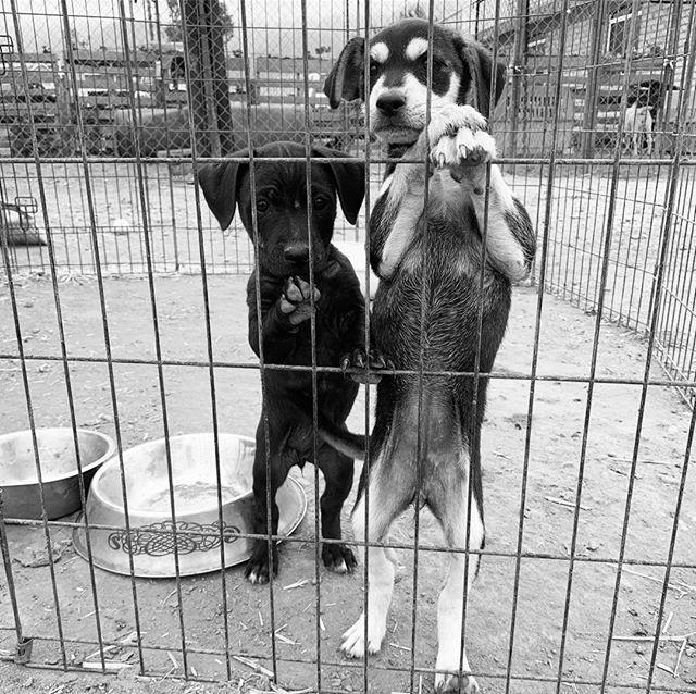 "Adopt don't shop 💔 My favorite breed is ""rescued!"" 🐾 #dogs #dog #dogsofinstagram #dogstagram #puppy #cute #pets #pet #instadog #love #doglover #instagram #dogoftheday #of #puppies #animals #animal #ilovemydog #doggy #petstagram #instagood #puppylove #doglovers #doggo #photooftheday #nature #puppiesofinstagram #cats #pup"