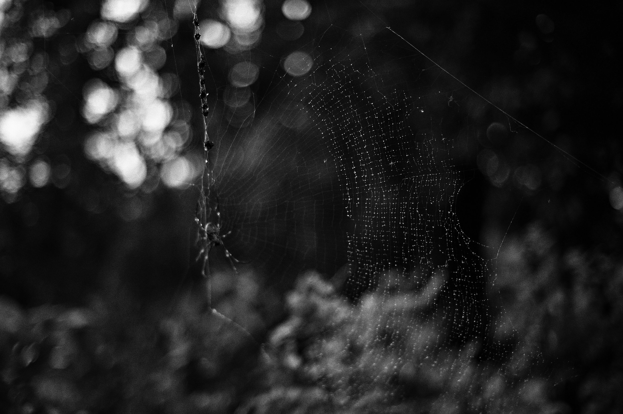 ©Gemma Troy Poetry