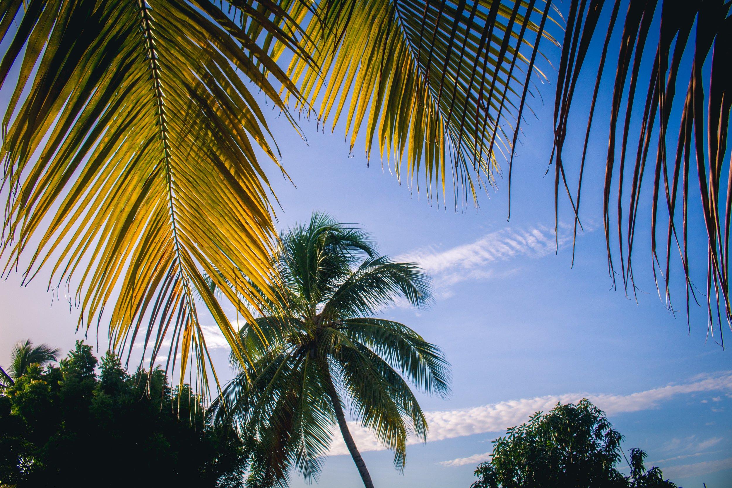 palm trees in Keta, Volta Region