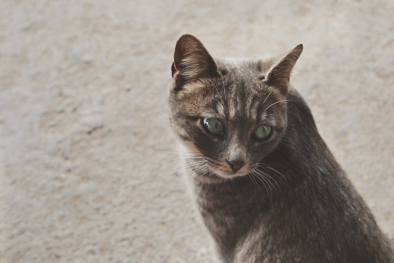 NICE CAT.
