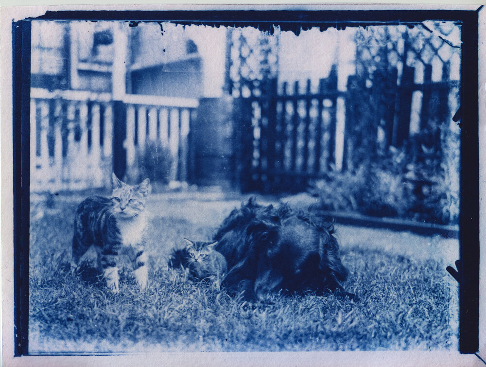 A photo from 1900 of two cats in a yard, developed using cyanotype methods (the earliest film development technology), so it is tinged slightly blue