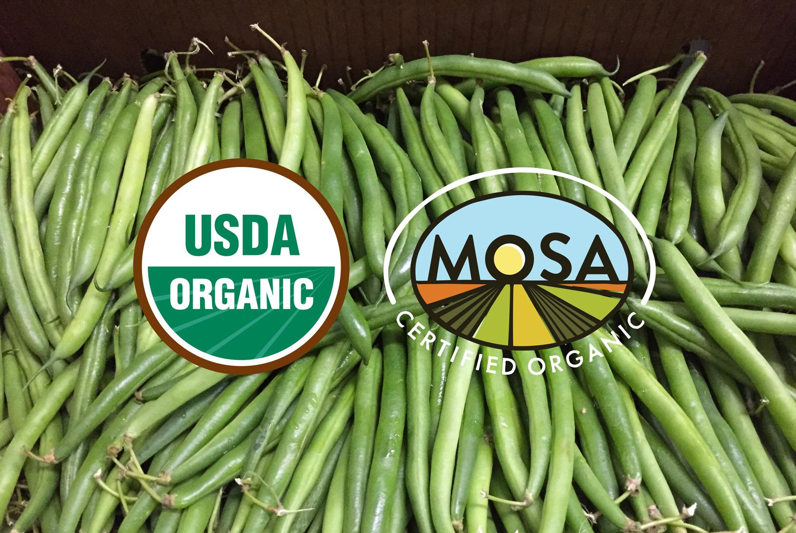 green-beans-2017-organic.jpg