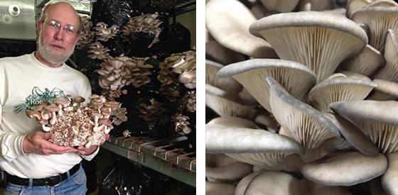 Kevin Doyle of Forest Mushroom