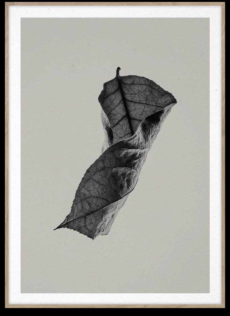 Sabi-Leaf-04-781x1070.png