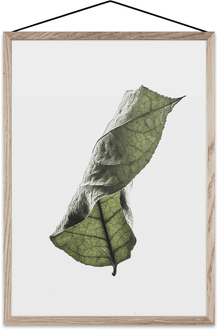 Floating-leaves-04-708x1070.png