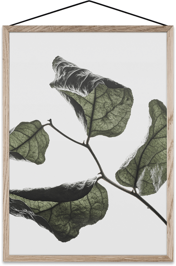 Floating-leaves-03-708x1070.png