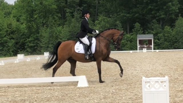 Audrey Barr Humphrey and Tamar Ingenue show that Arabs can get it done in the dressage court!