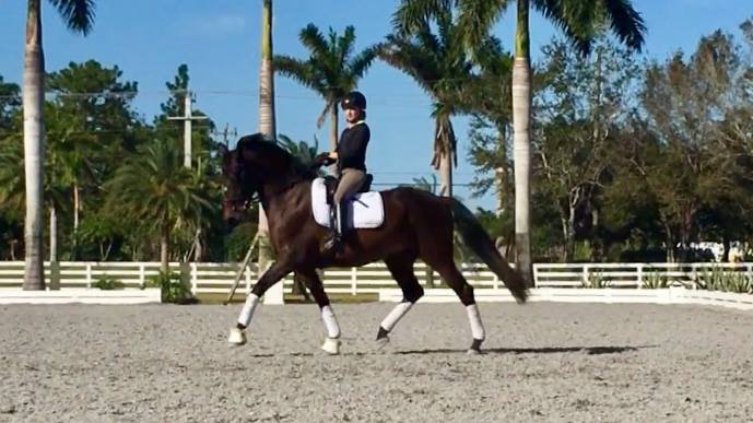 "Alessandra Ferrucci brings Holsteiner/Andalusian Anastasia from ""stuck"" to Second Level; this same saddle fits and works on her FEI ride, HF Sagacious!"