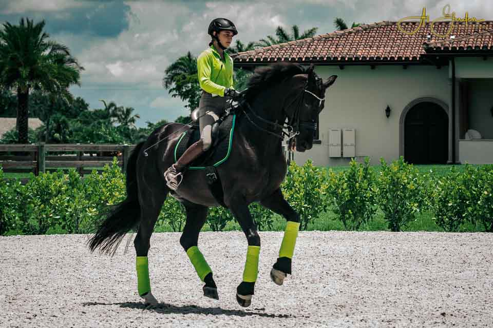 Alessandra Ferrucci and Sagacious HF, anchor members of our U-25 FEI dressage force, training in their EQ Flapless Saddle. This pair rank 5th in the nation as of August, 2019.
