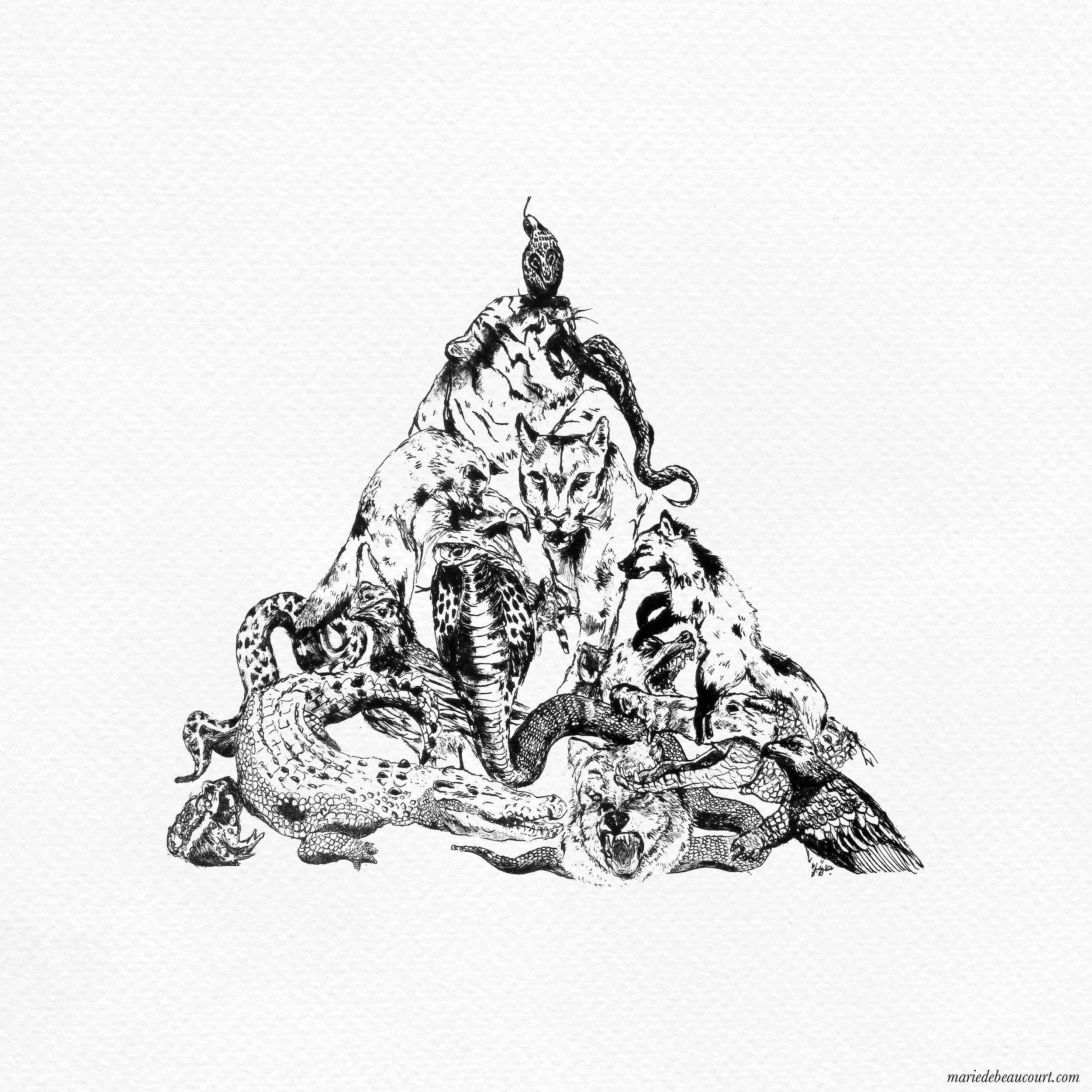 marie-de-beaucourt-illustration-animalia-triangle-predators-wolf-tiger-2017-web.jpg