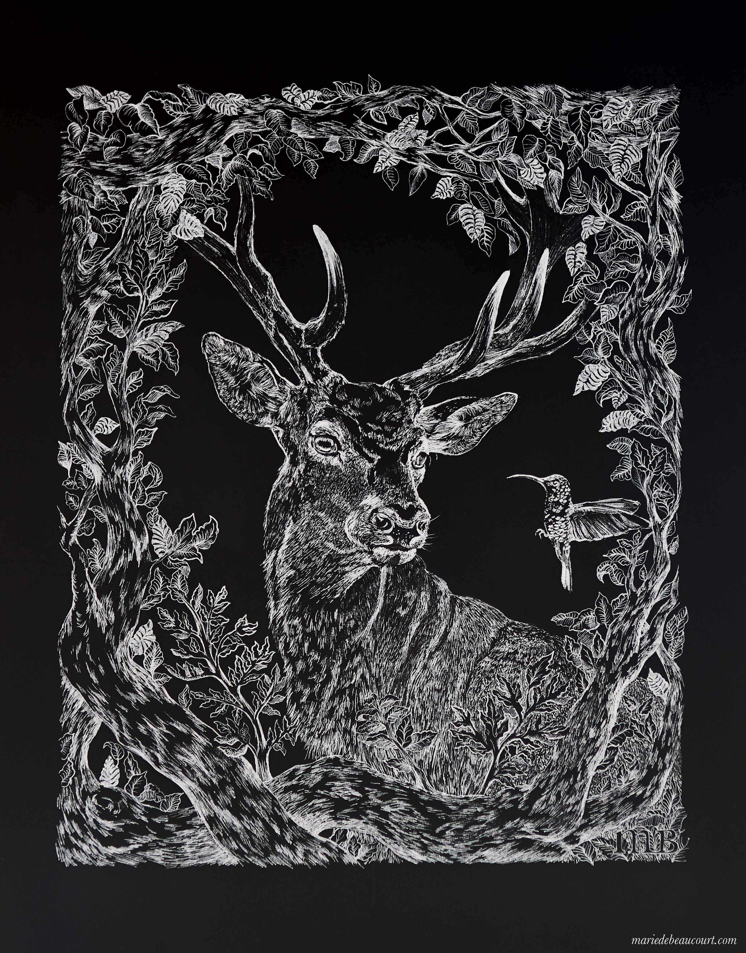 marie-de-beaucourt-illustration-deer-stag.jpg
