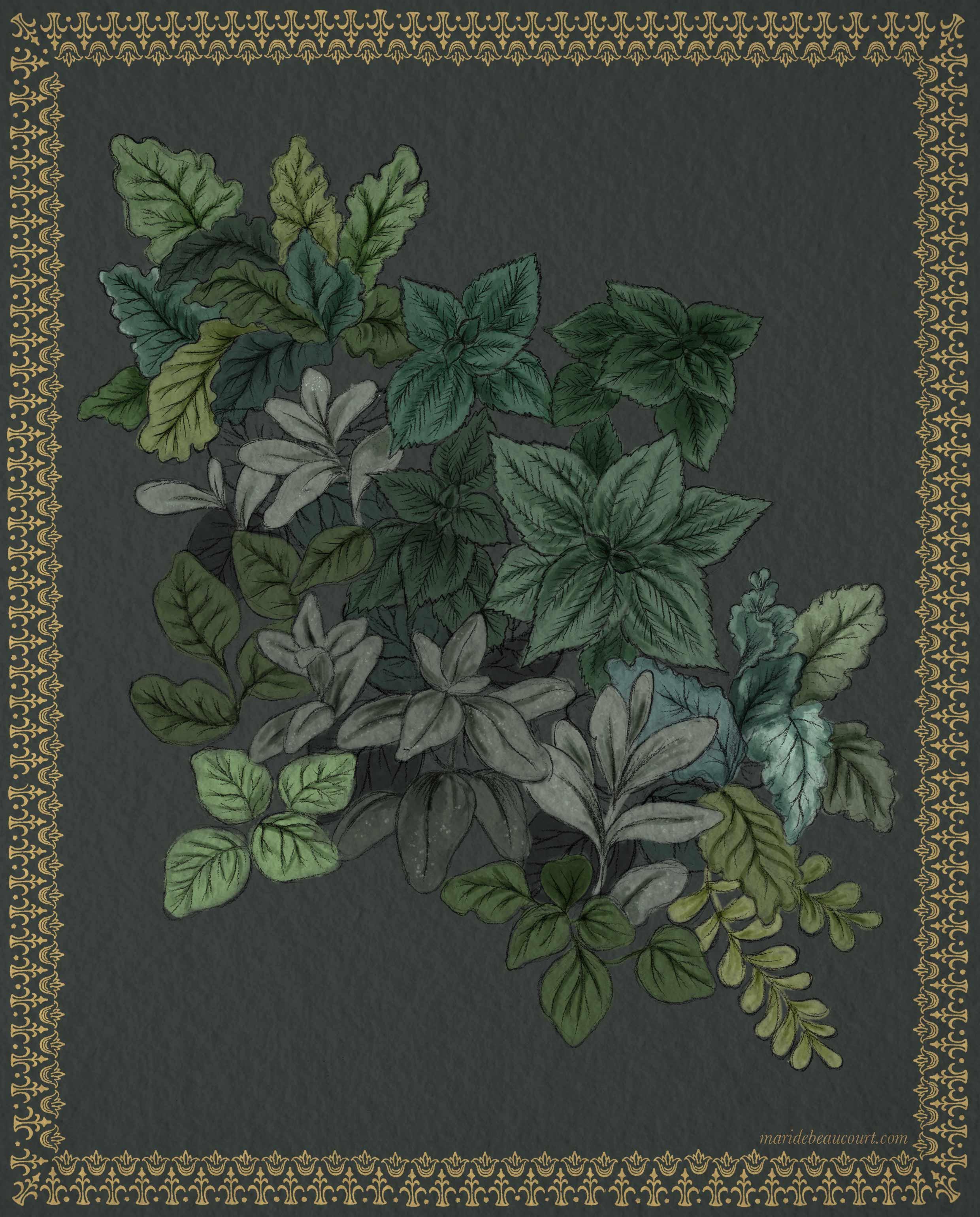 Marie-de-beaucourt-2018-Botanic-illustration-Feuillages-WEB.jpg
