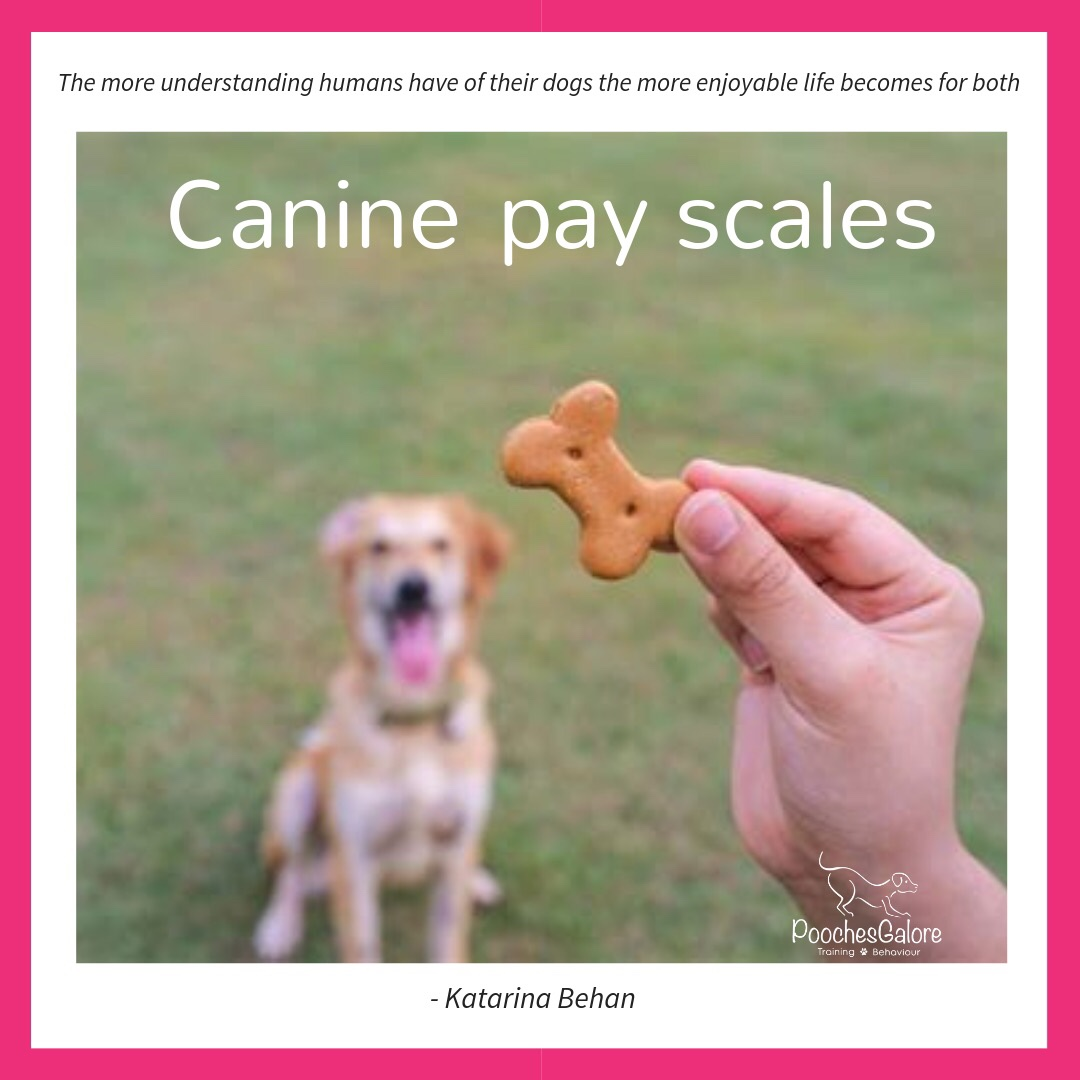 Canine pay scales