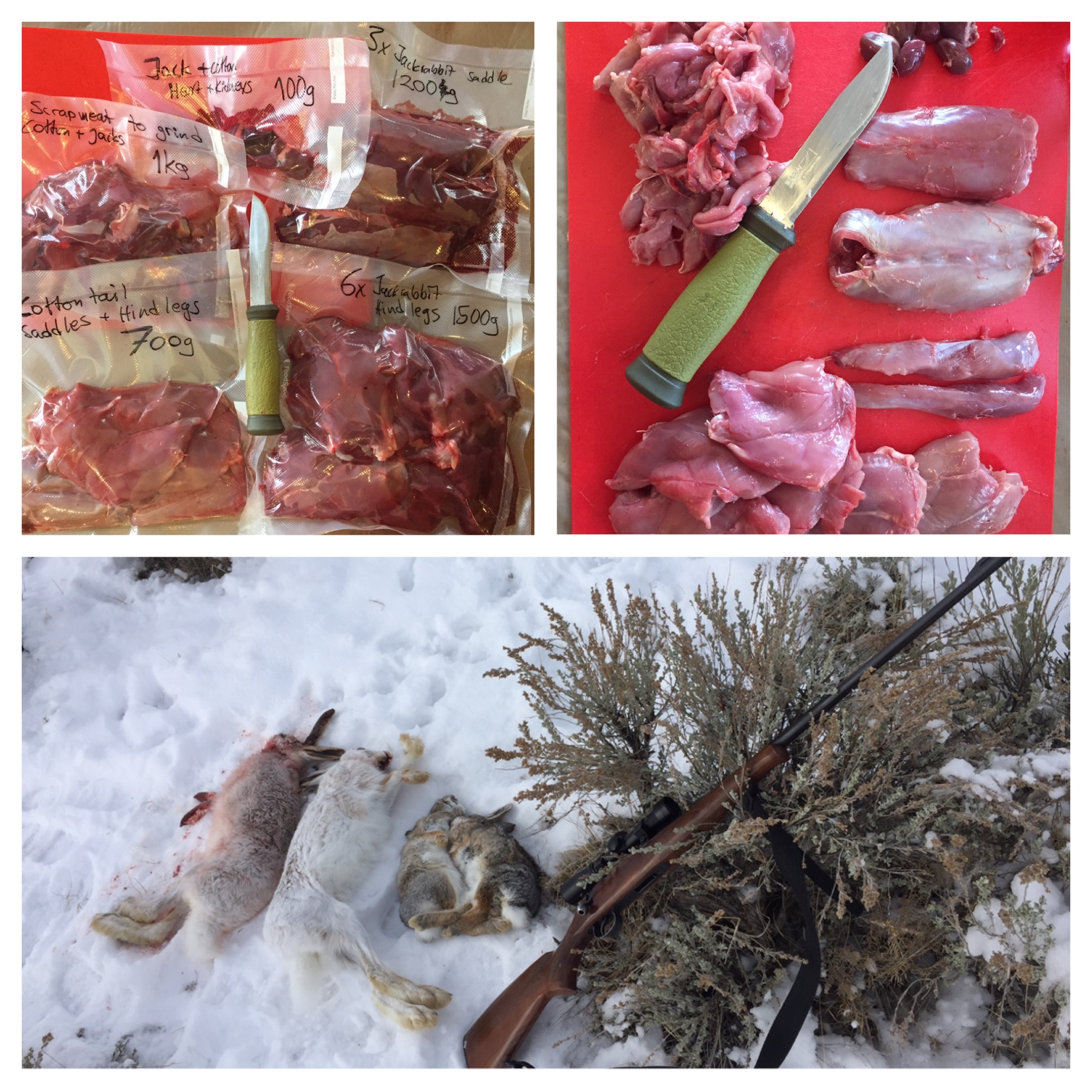 My traditional 1-day-after-elk-season rabbit hunt, which after 1 hour had given me jackrabbit for Swedish meatballs and some cottontail rabbits that are still waiting in the freezer. After vacuum packing the rabbits they aged for  40°C day grades (which in my fridge equals roughly about 10 days).