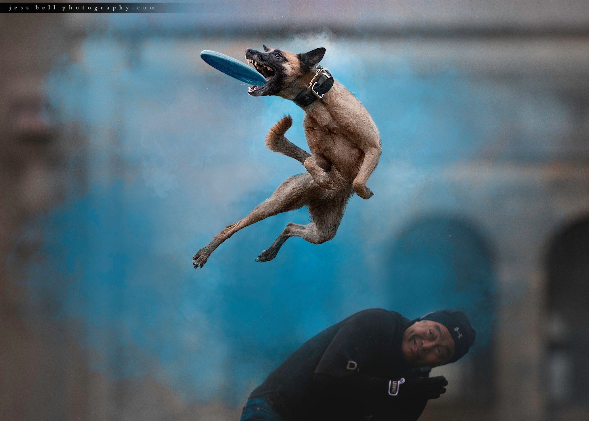 Jess Bell Photography - holi sessions - Toronto Pet Photographer