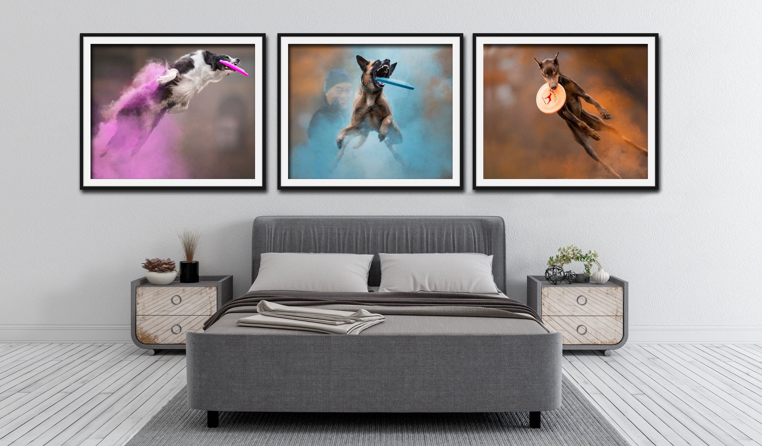 Jess Bell Photography - Artistic Animal Imagery - Toronto Pet Photographer - artwork