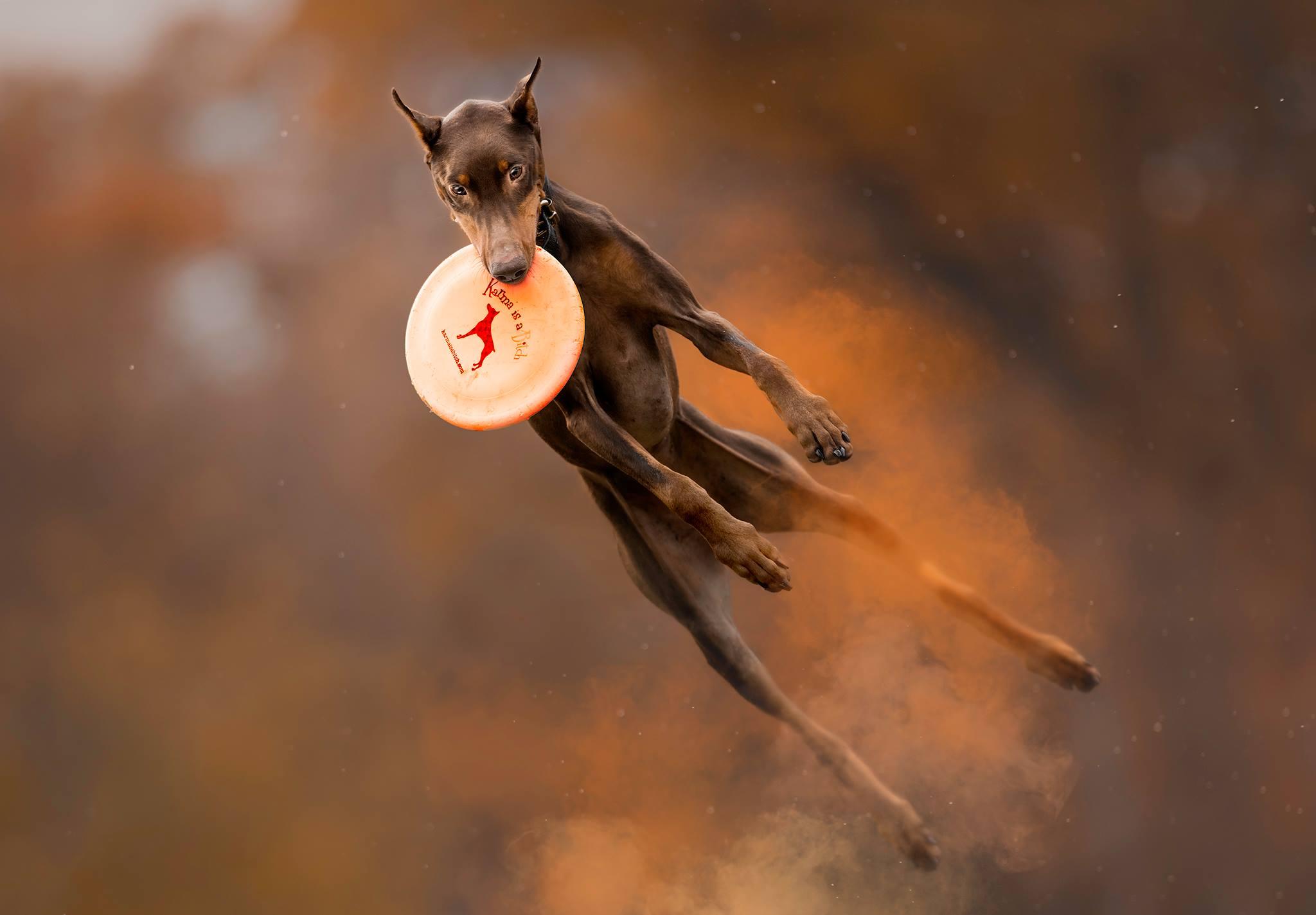 Toronto Dog Photographer Jess Bell Photography - holi information