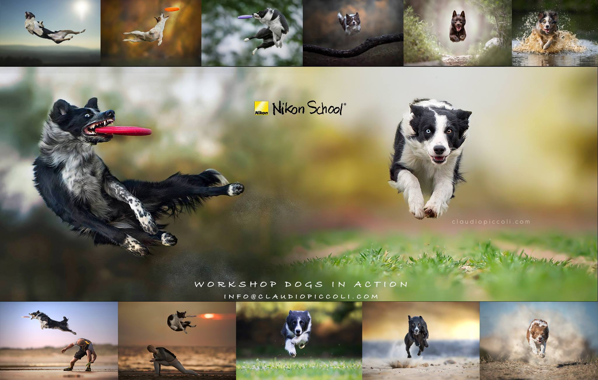 Jess Bell Photography - Dogs in Action workshop