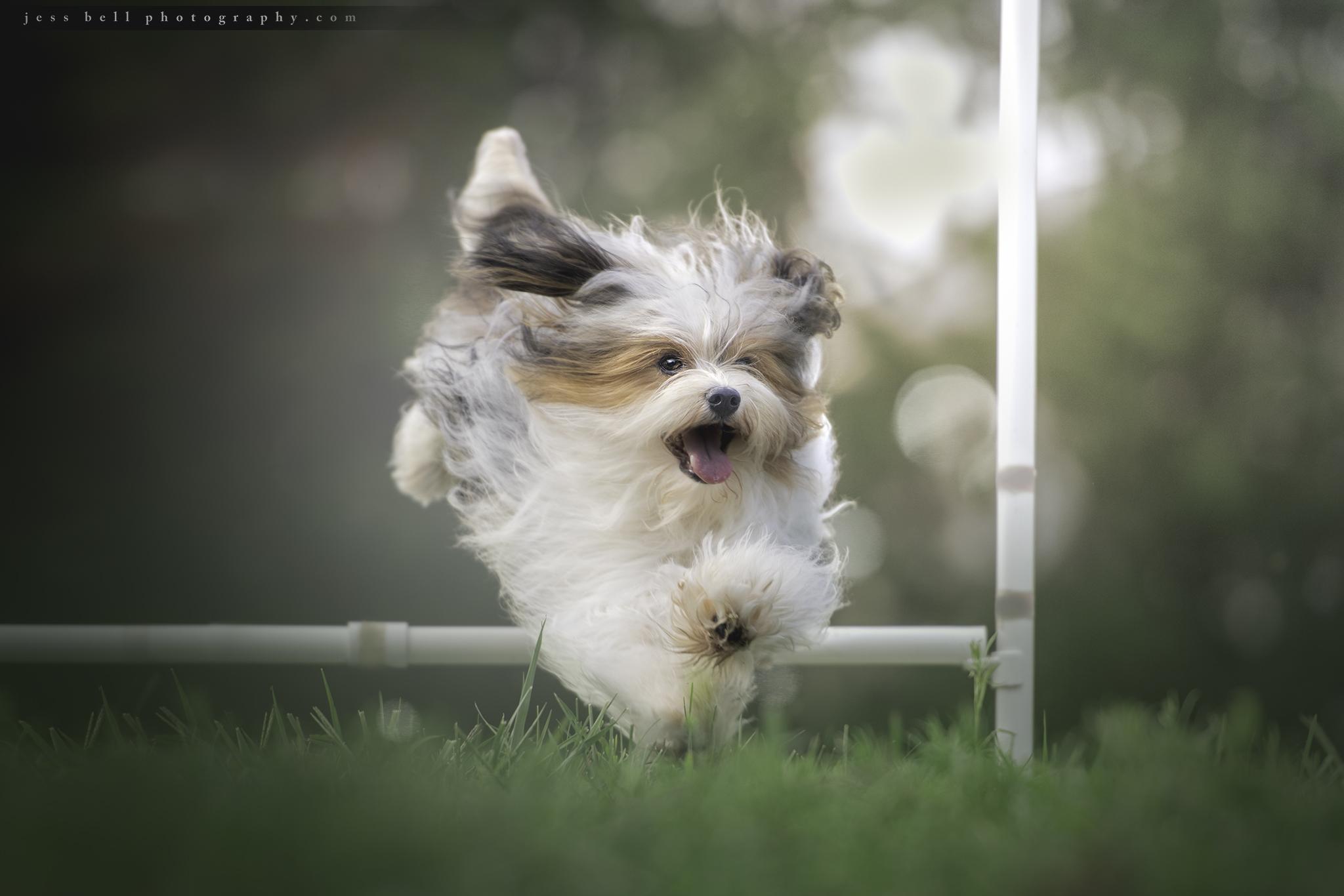 Jess Bell Photography -Indy jump watermark.jpg