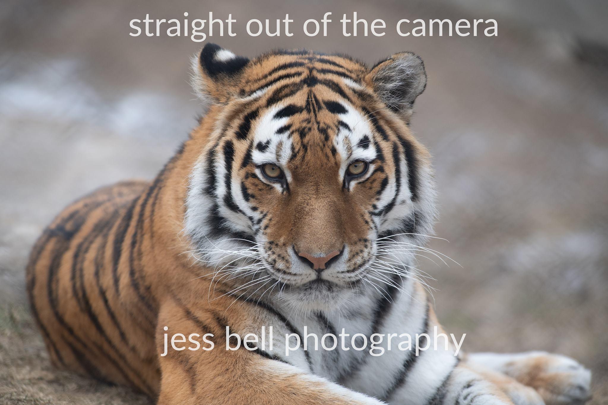 Artistic Animal Photography - Jess Bell Photography - Toronto, Ontario