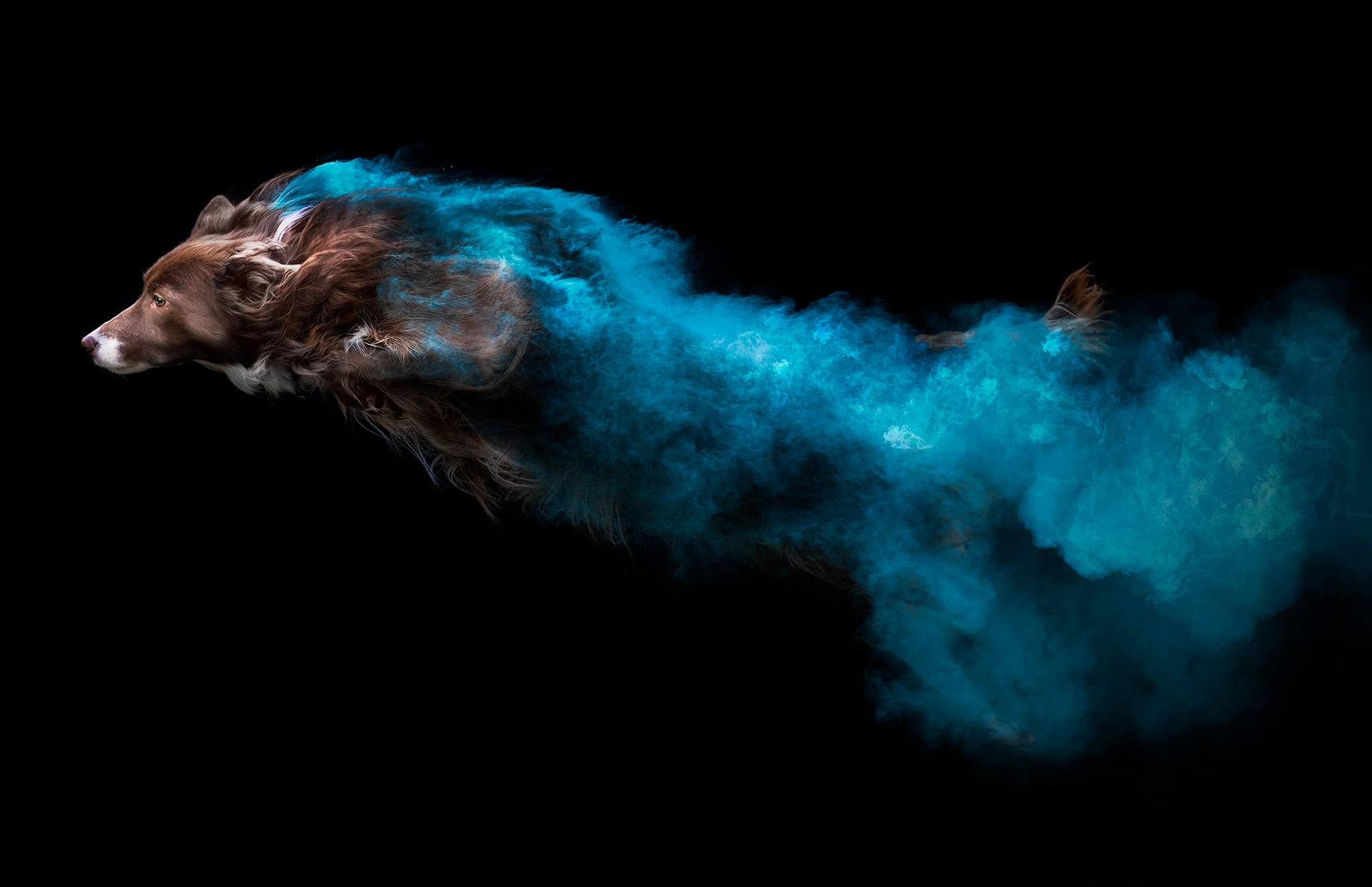 Toronto Dog Photographer Jess Bell Photography, artistic animal imagery, holi powder