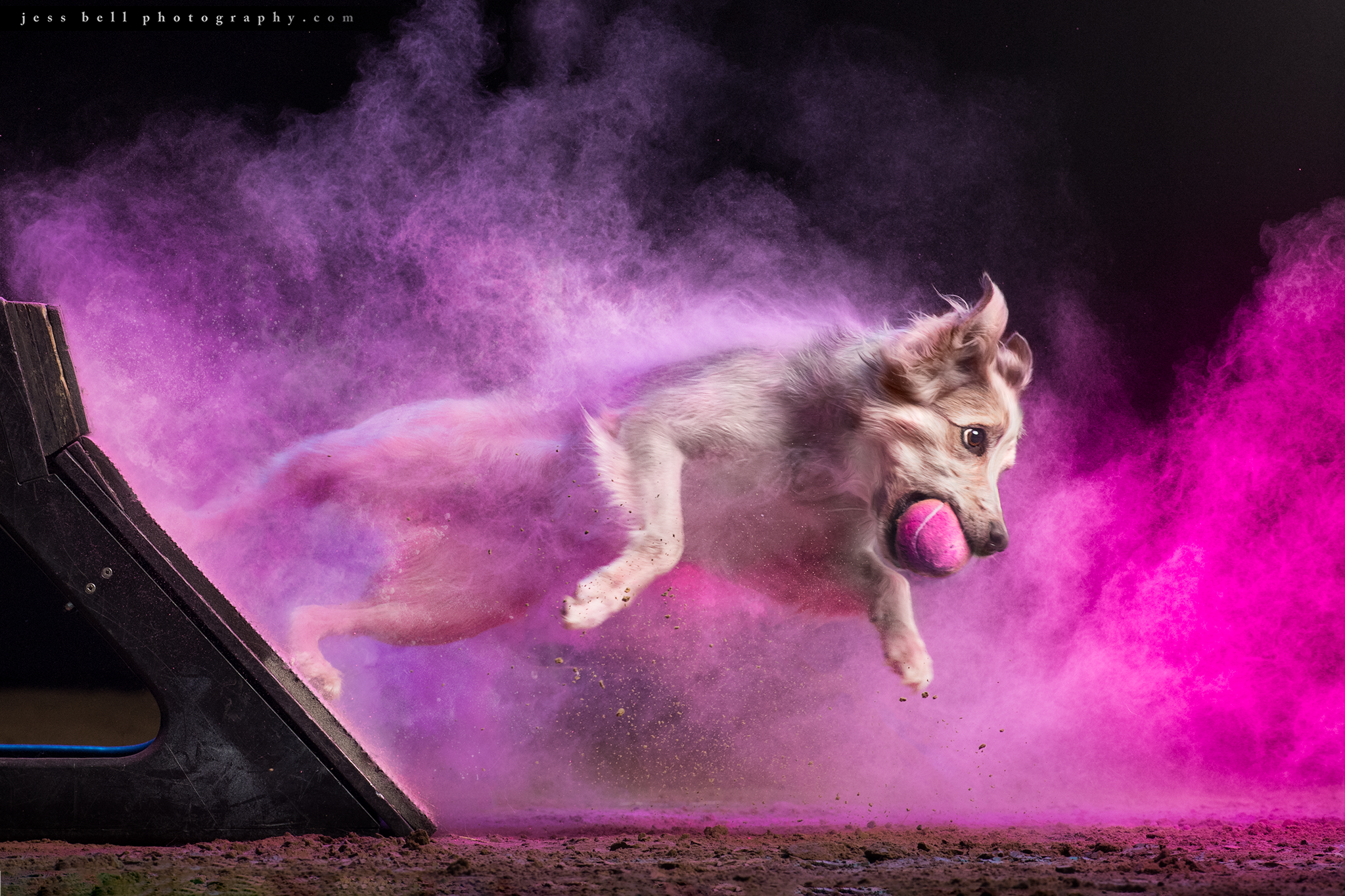 Image flyball.png