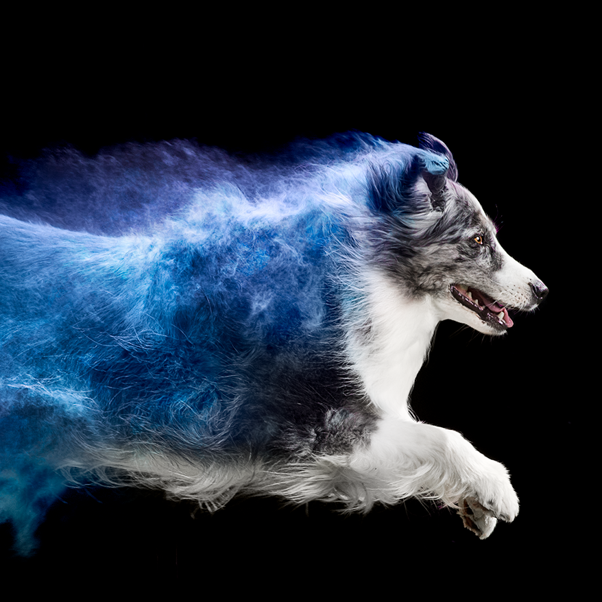 Coloured powder sessions with Toronto animal photographer Jess Bell Photography