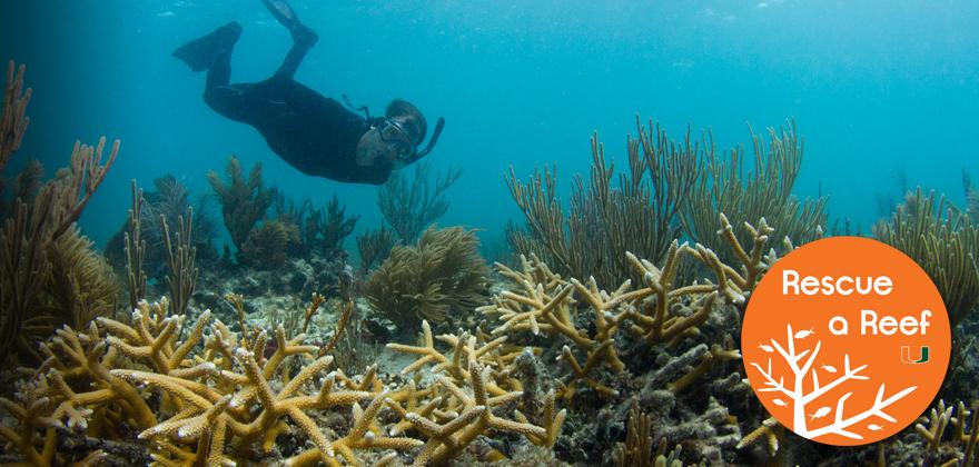 Donate-Reef-Header.jpg