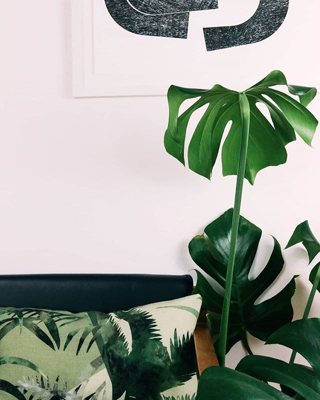 Our leafy 'Jungle' cushion, printed on fabric made by @butefabrics chair by @dwcabinetmakers 🌿☘🌱🍃🌴. ________________________________________________ #leafydesign #interiortextile #bespokeatelier #glasgowdesigners #monstera #moderninteriors #greenery