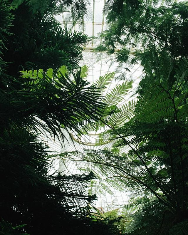 The Kibble Palace looking lush, one of our favourite places in Glasgow for inspiration 🌿🍀🌴🍃 ________________________________________________ #glasgow #kibblepalace #glasshouse #greenspaces #citysanctuary #bespokeatelier
