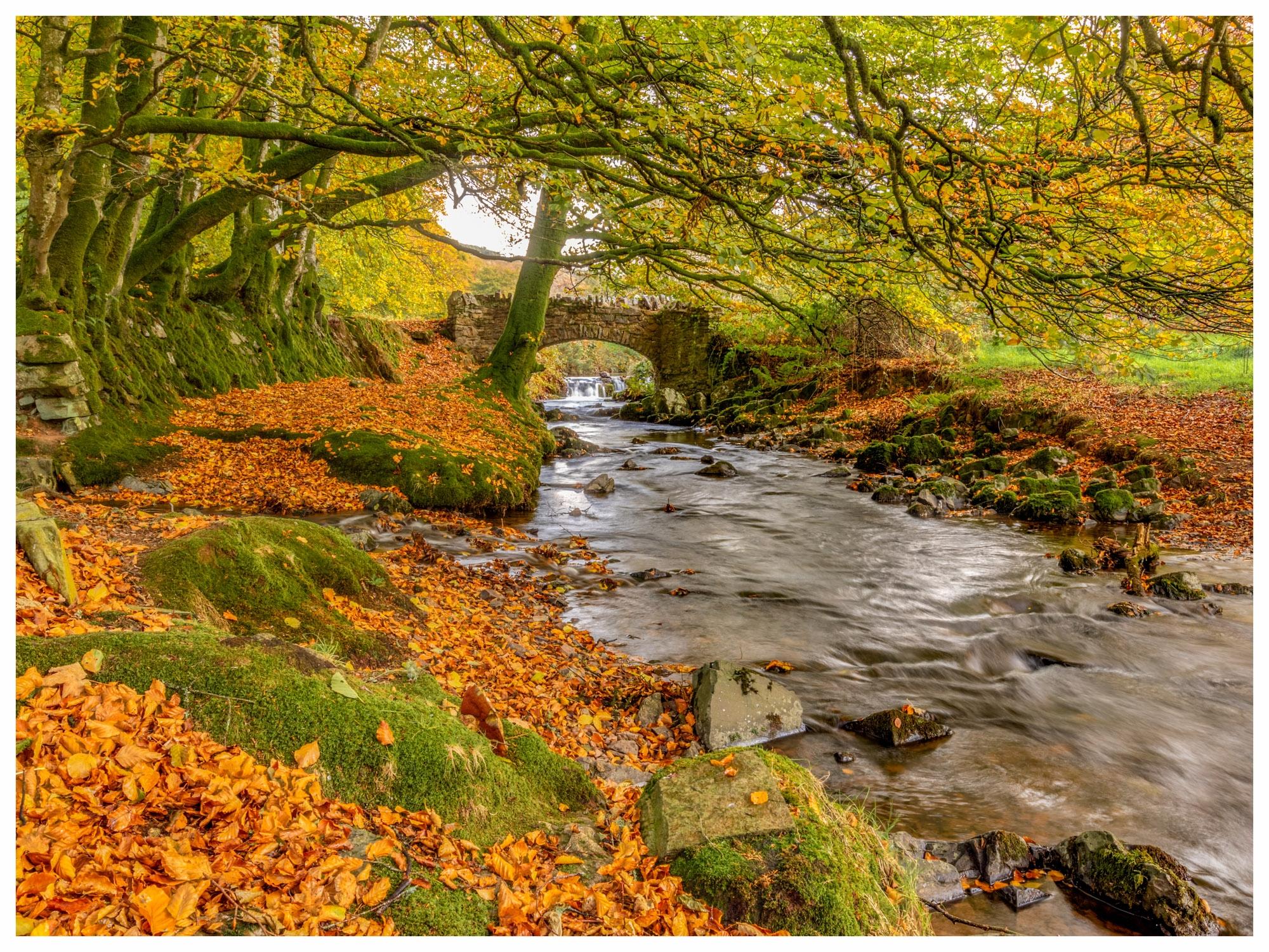 Autumn colours @ Robbers Bridge, Exmoor