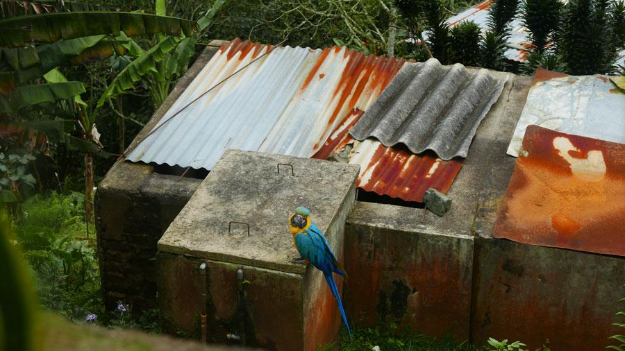 Free range parrot