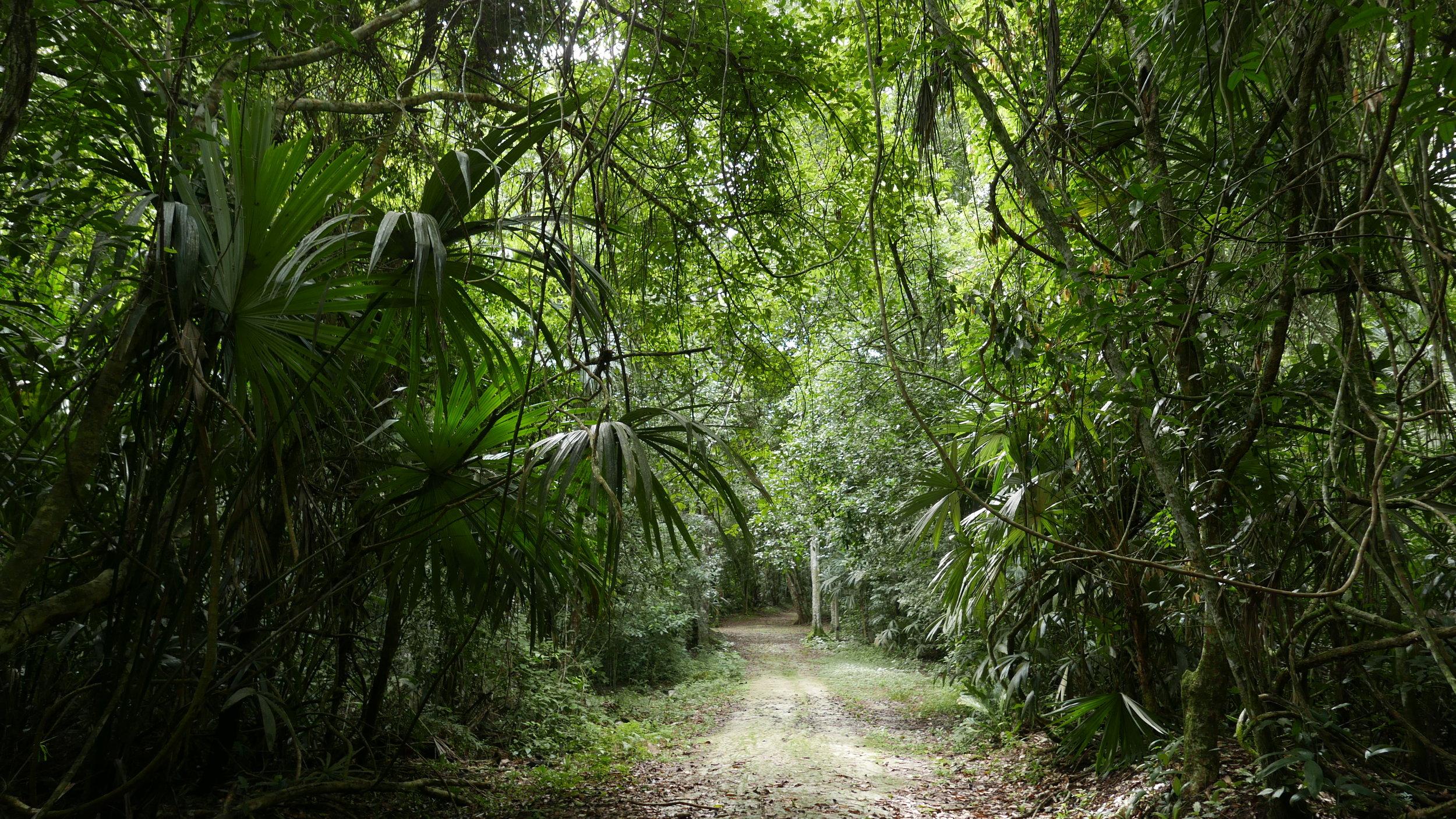 Jungle trails in Tikal