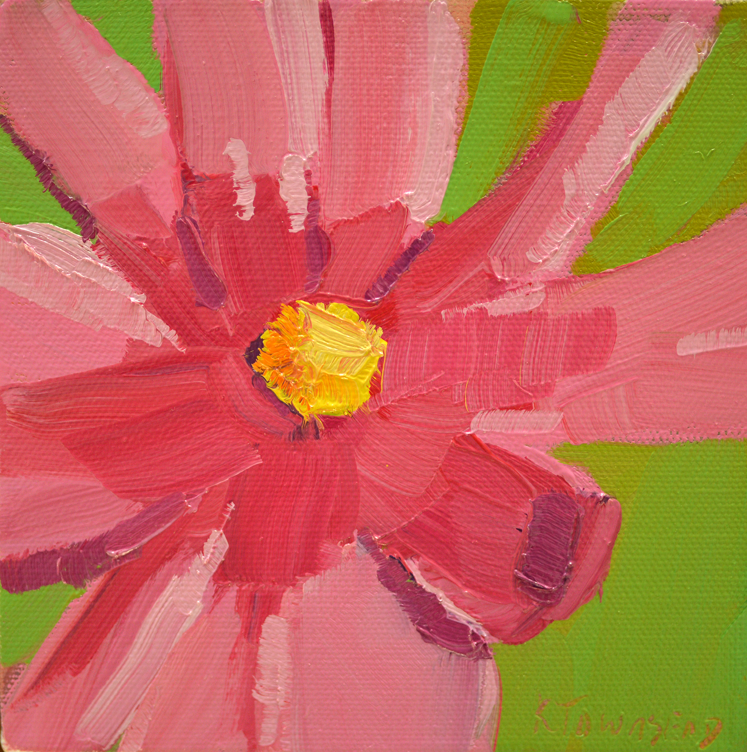 Flower Study - Pink Cosmos