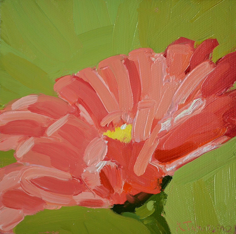 Flower Study - Pink Gerbera