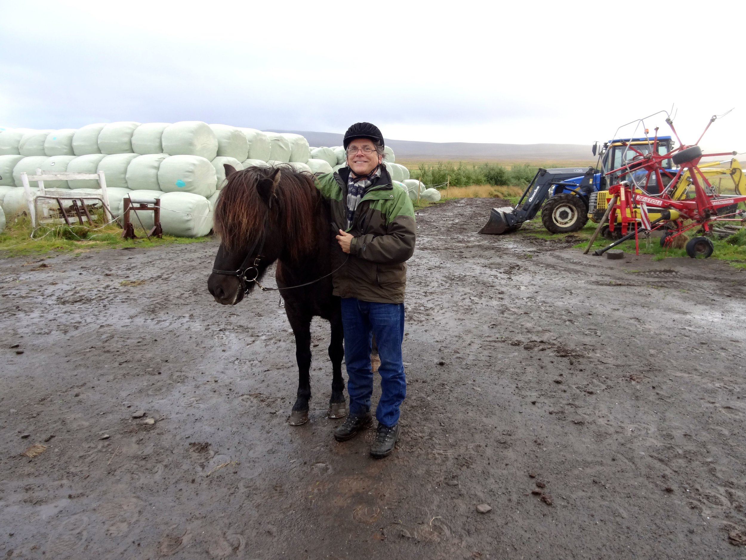 Iceland horses are small, the size of ponies. Icelandic law prevents horses from being imported into the country and exported animals are not allowed to return.