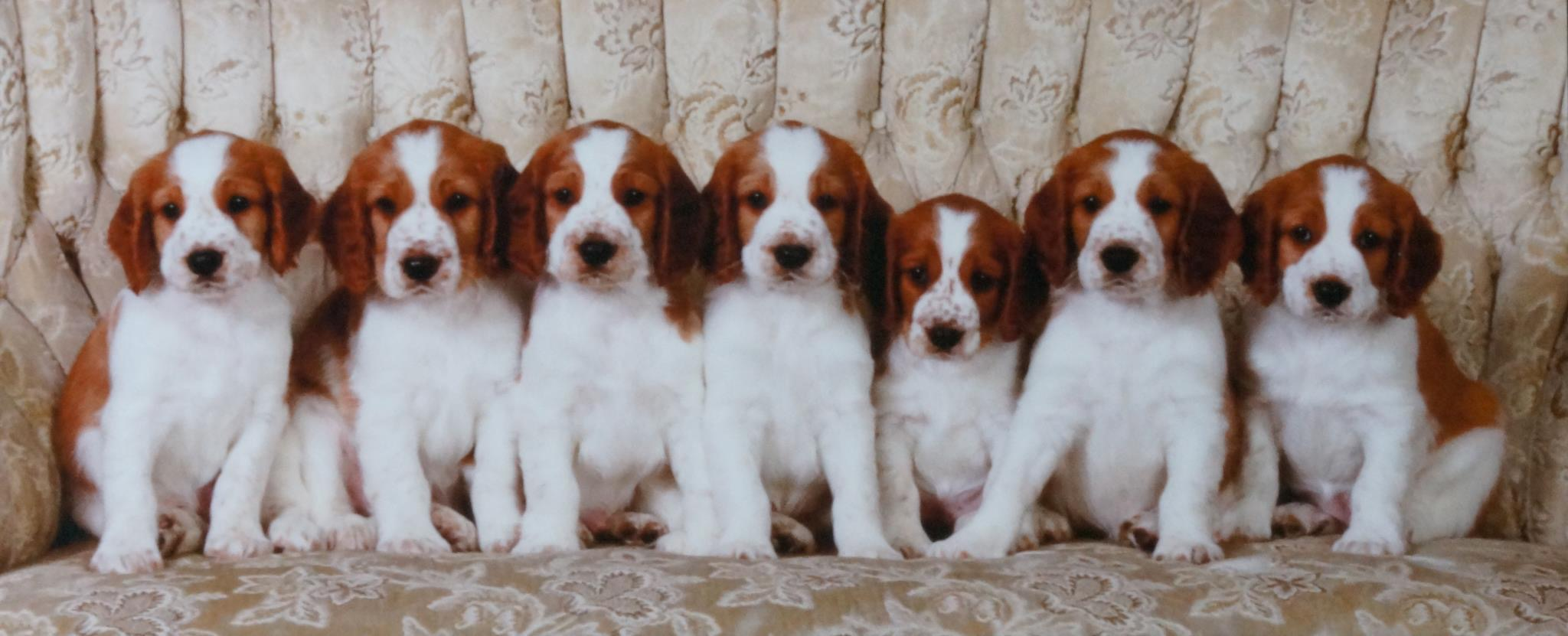 The 'Promise' Litter, April 2012