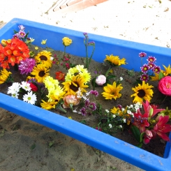 20150316-Preschool-Flowers_0769-245x245.jpg