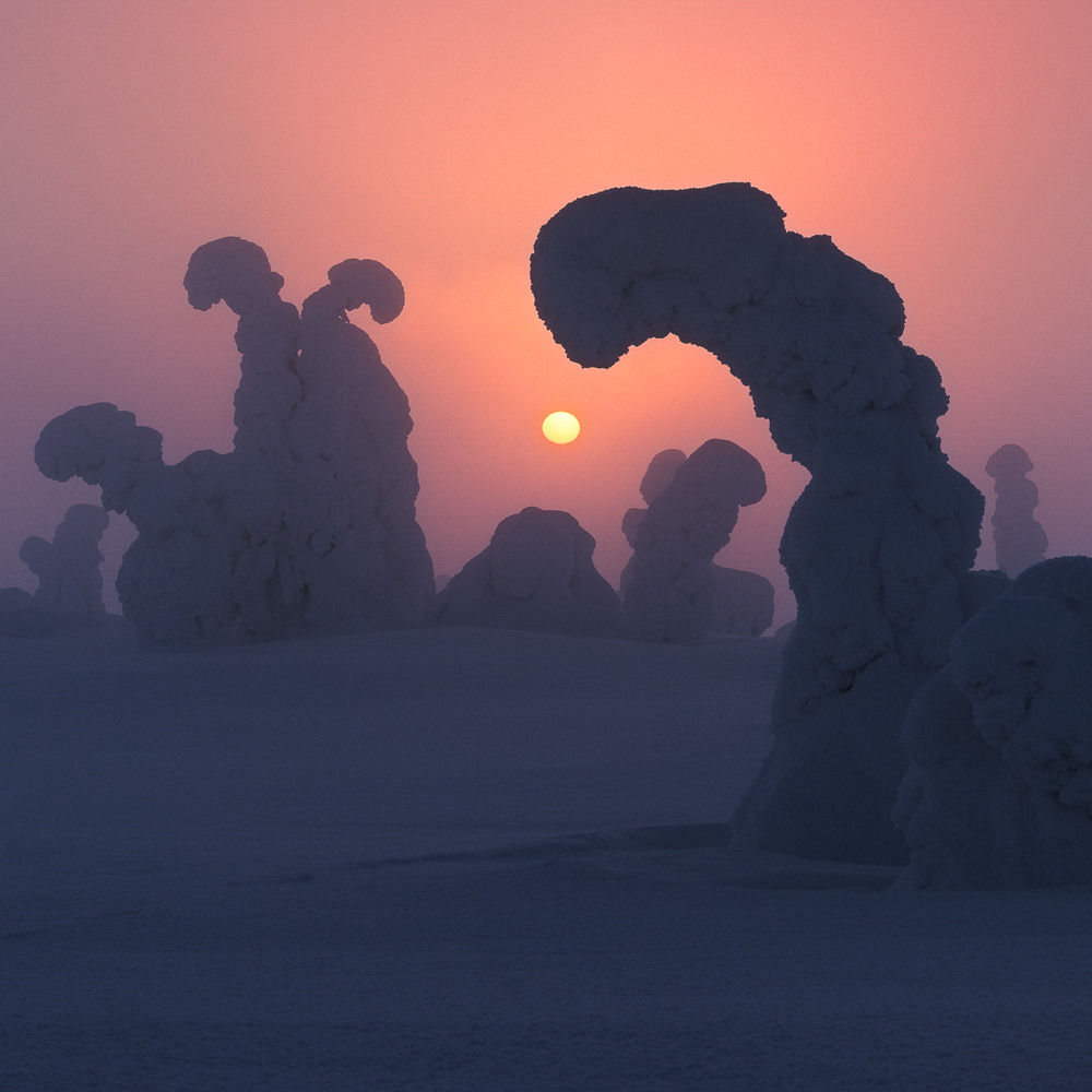 LAPLAND, FINLAND - 25th January - 1st February 2020