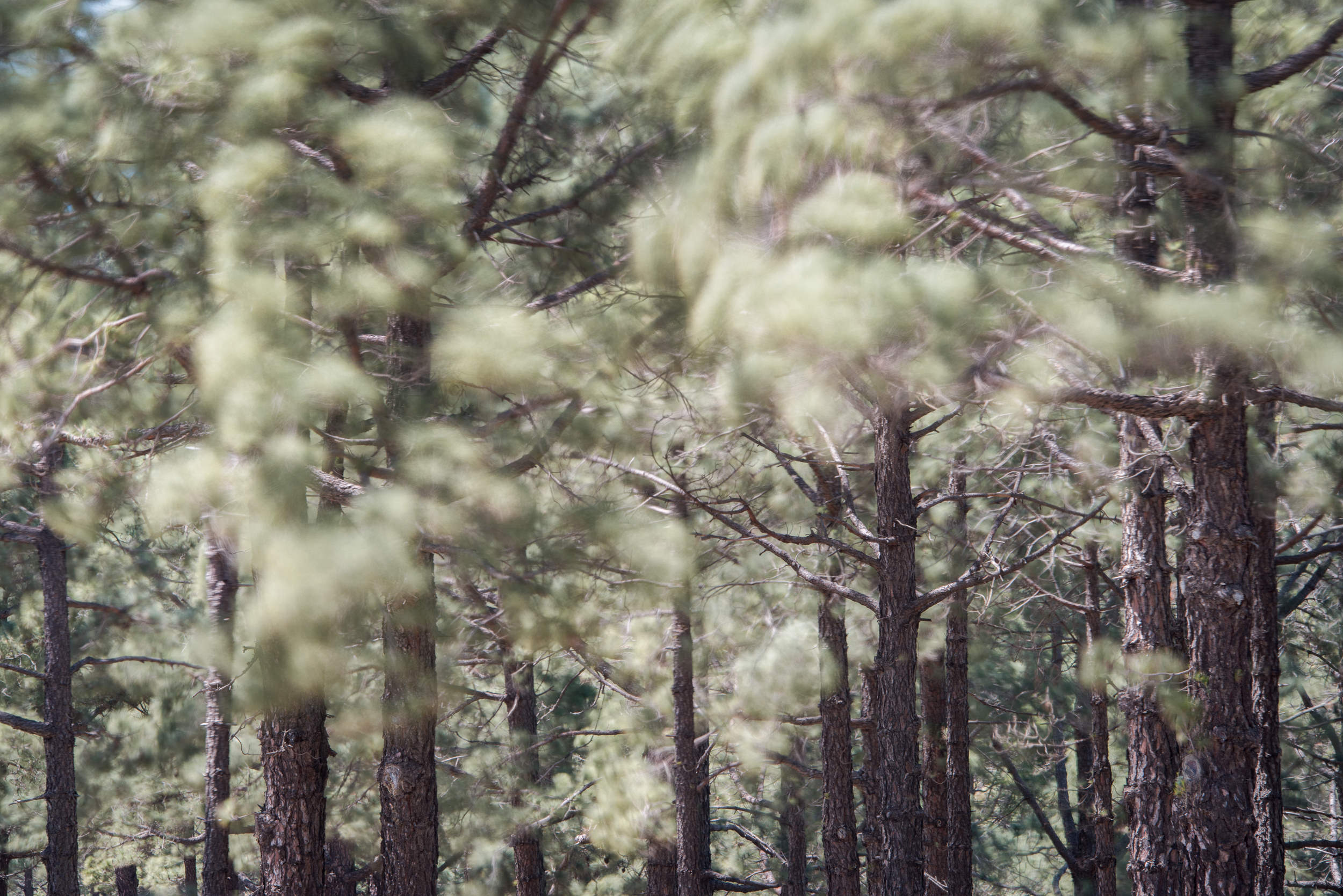 Playing with movement, how to photograph the breeze in the forest - La Palma island, Rafael Rojas.jpg