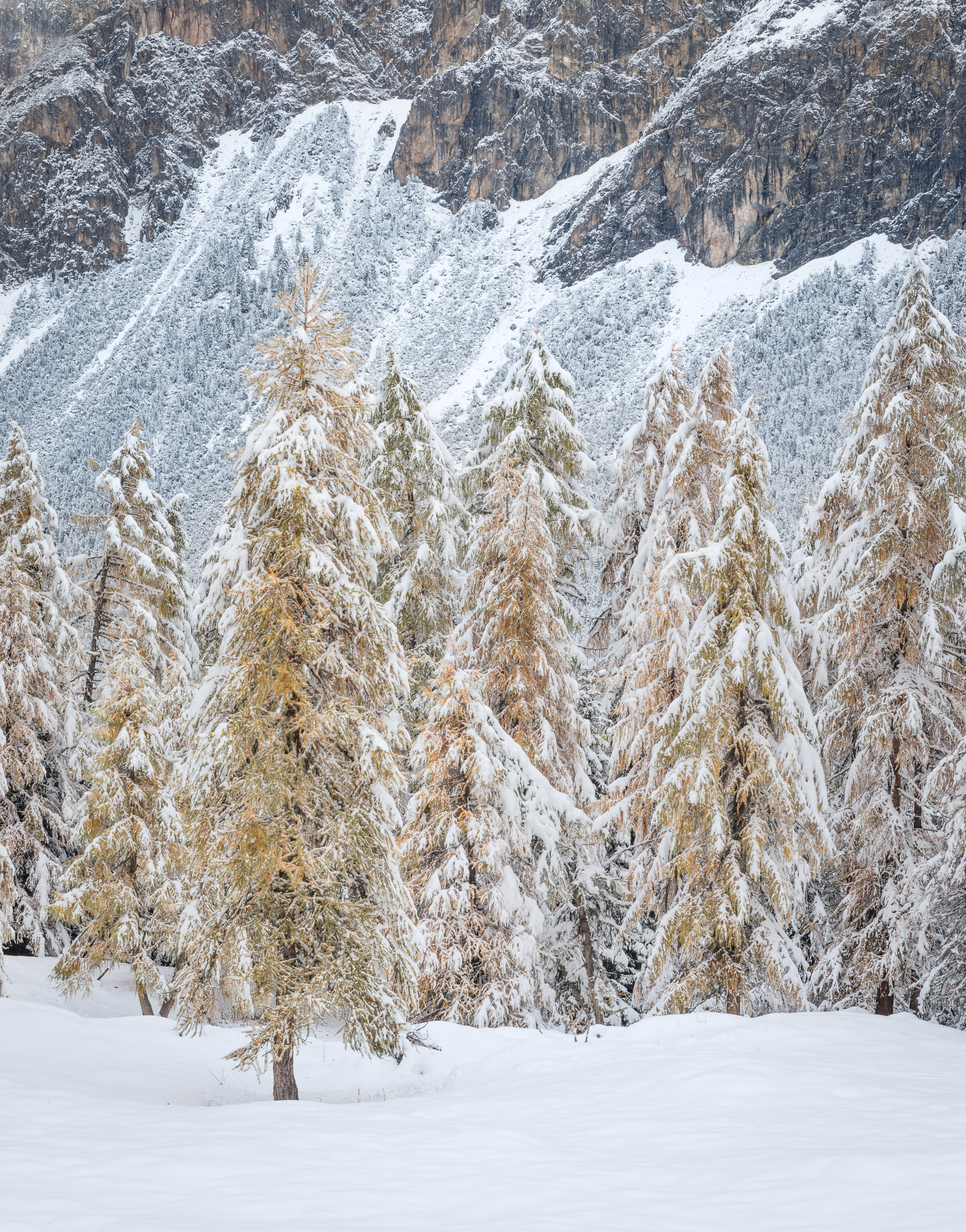 Study of textures in the winter forest with pale colors and tight composition - Switzerland, Rafael Rojas.jpg