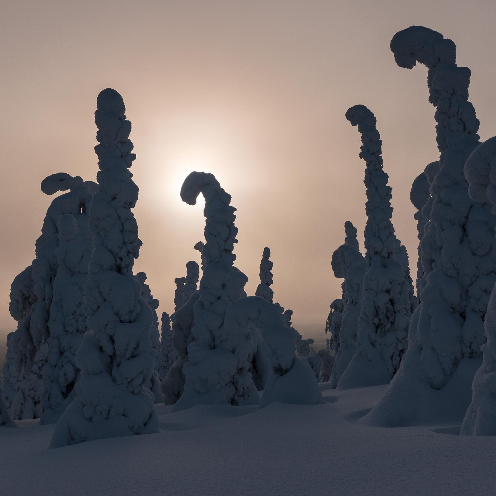 snow_ladies_RR_20120208_DSC4785.jpg