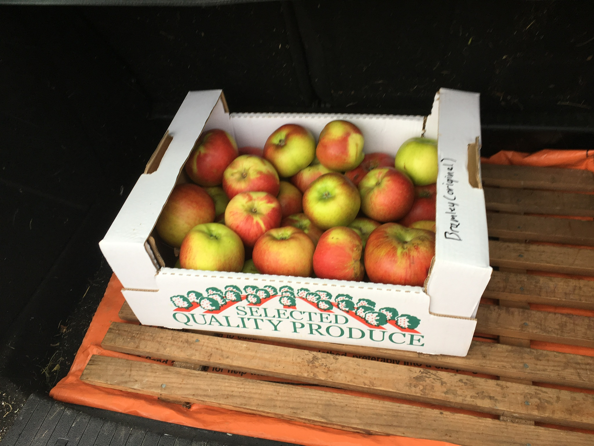 Bramley apples, locally grown