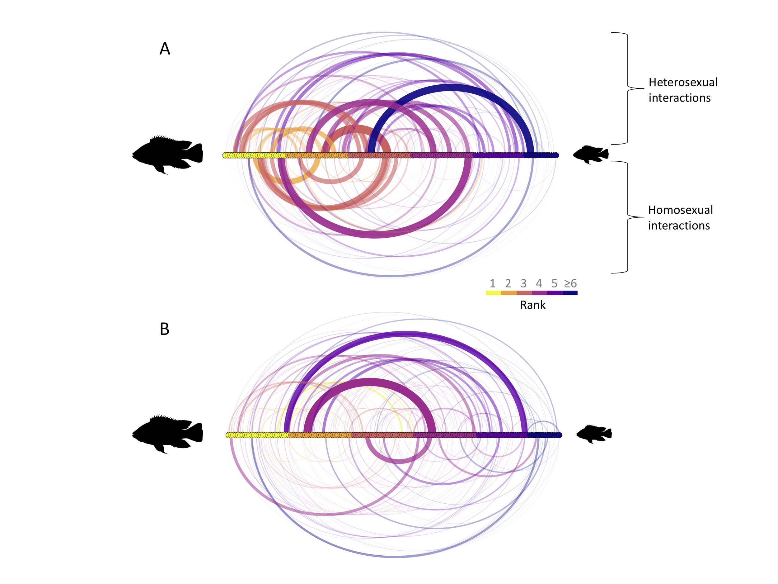 Dominance interactions in social cichlid groups